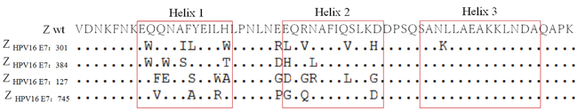 Amino acid sequence alignment of wild-type Z domain and four selected affibody molecules.