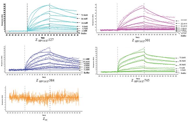 Biosensor binding analysis of 4 purified affibody molecules.