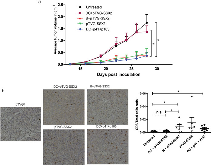 Plasmid treated mouse B cells, and not dendritic cells, are able to prime an anti-tumor response and elicit tumor infiltration of CD8 T cells