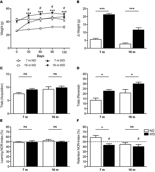 WD increases body weights and exacerbates age-induced cognitive decline in APPswe/PS1 mice.