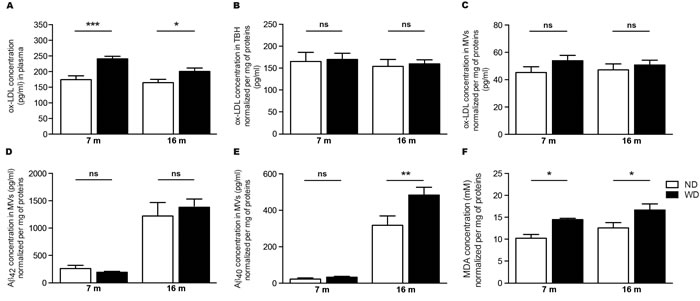 WD increases ox-LDL levels in the blood circulation and exacerbates soluble Aβ 1-40 and MDA accumulation in cerebral microvasculature.