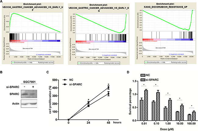 SPARC expression and GC proliferation as well as drug sensitivity properties.
