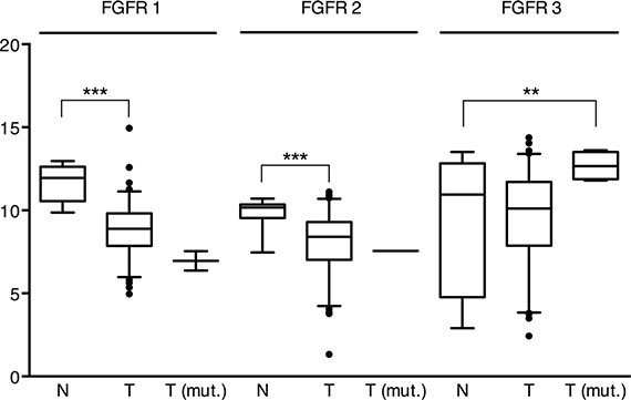 """mRNA expression of FGFR1, 2 and 3 in the """"squamous-like"""" bladder cancer subtype of the TCGA cohort."""