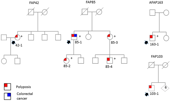 Pedigrees of ASE families.