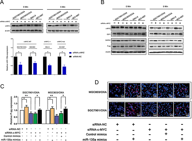 miR-135a promoting oxaliplatin resistance in gastric cancer cells is regulated by E2F1/DAPK2/P-pg axis.