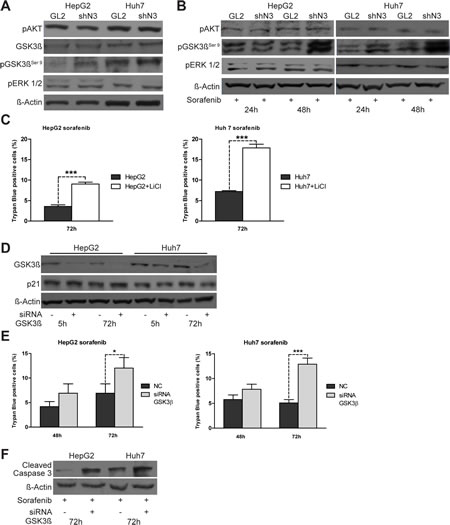 pGSK3βser9 expression is regulated by Notch3 and enhances the effect of sorafenib.