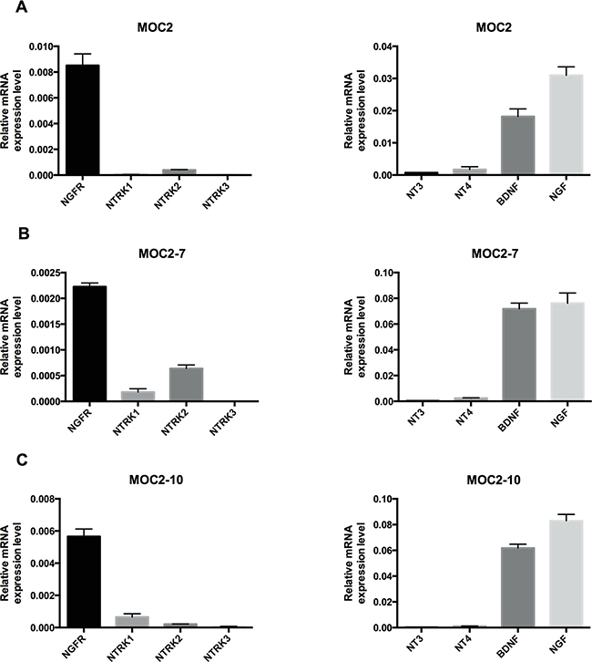 Neurotrophin receptor and neurotrophin expression in murine oral squamous cell carcinoma cell lines.