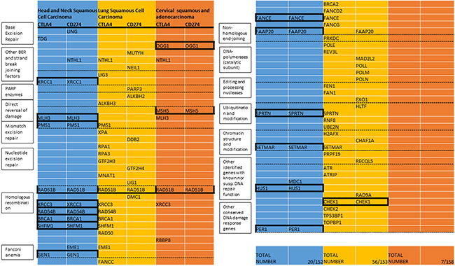 List of DNA repair genes with methylation associated with expression of CTLA4 or CD274 (TCGA).