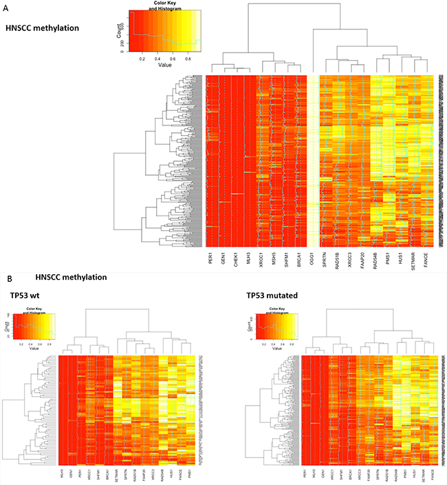 Heatmaps showing clustering and differential methylation of candidate genes from all three squamous histologies.