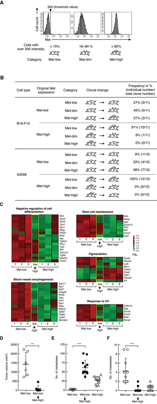 Clonal change in Met expression, gene expression profile, and tumor characteristics of Met-low and Met-high populations.