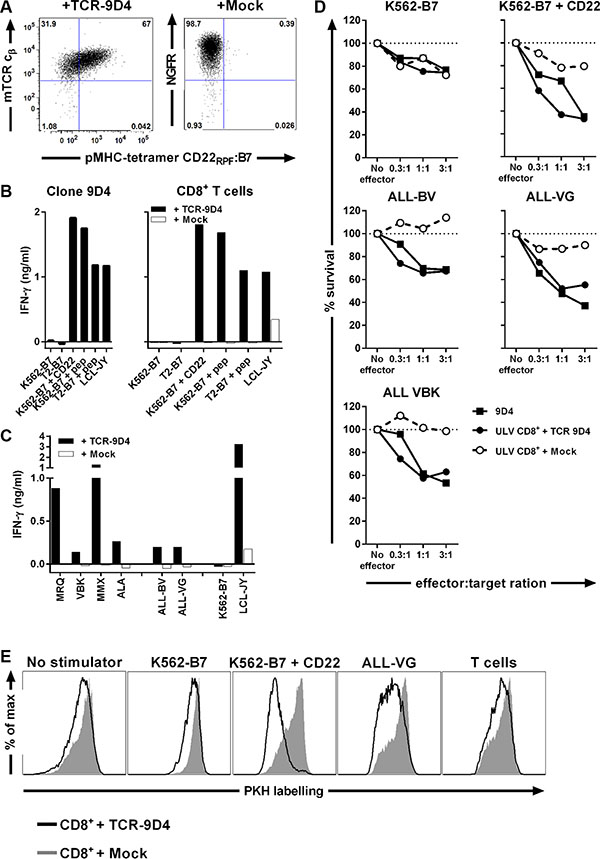 TCR gene transfer of TCR-9D4 installs CD22-specific reactivity onto recipient CD8+ T-cells leading to lysis of B-cell malignancies.
