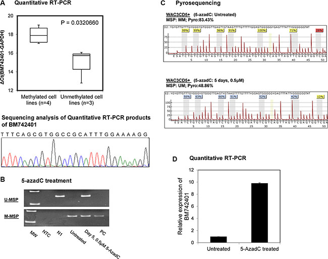 Methylation and expression of BM742401 in CLL cells.