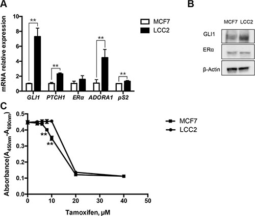 Characterization of tamoxifen sensitive MCF7 and tamoxifen resistant LCC2 breast cancer cells.