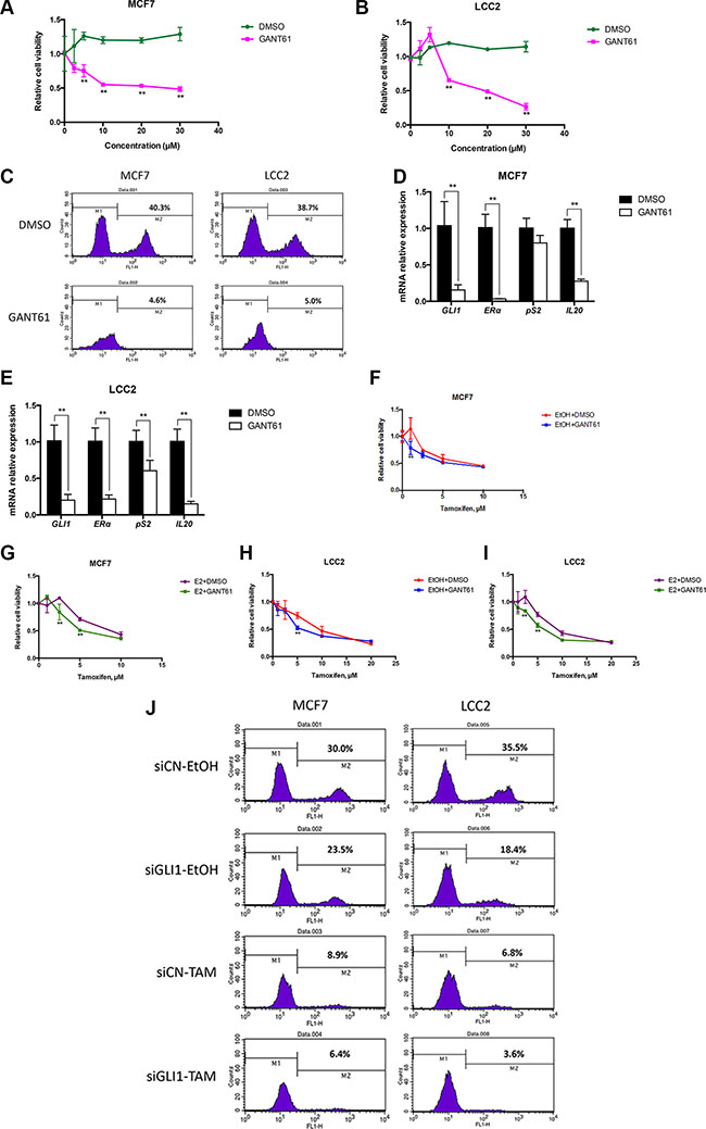 GANT61 increases tamoxifen cytotoxicity, irrespective of the presence or absence of estrogen.