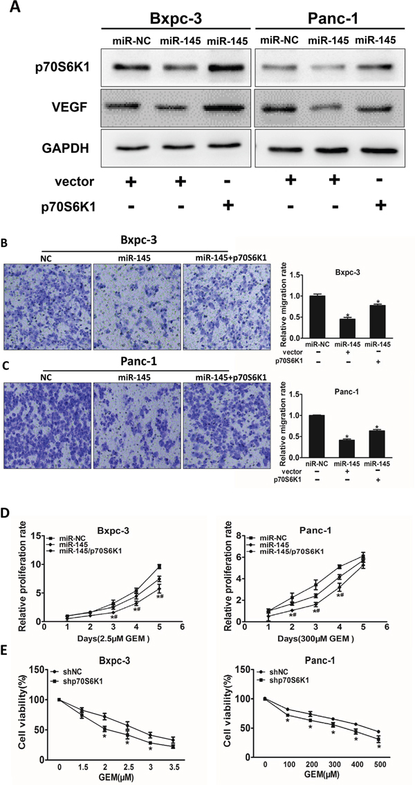 Over-expression of p70S6K1 reverses the inhibitory effects of miR-145.