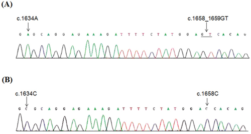 Specific sequencing of PIK3CA exon 9 and pseudogene.