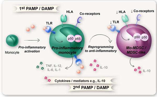 Reprogramming of monocytes into Mo-MDSCs.
