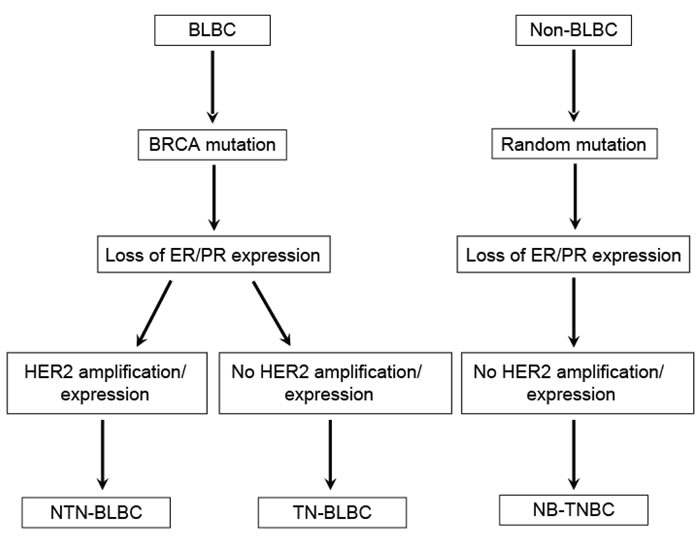 Origin of triple-negative and basal-like breast cancers.