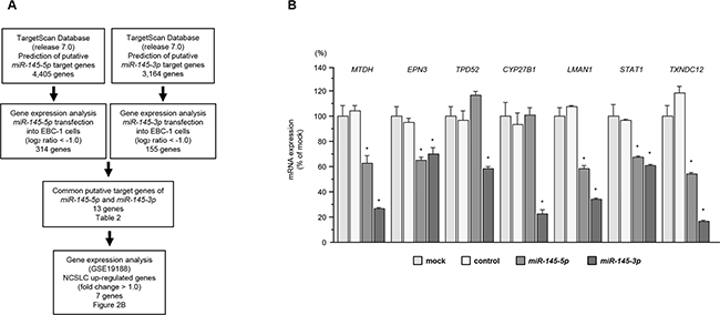 Identification of genes coordinately regulated by miR-145-5p and miR-145-3p.