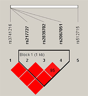Haplotype block map for the SNPs genotyped in this study.