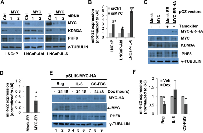 MYC sustains the expression of PHF8 and KDM3A by repressing miR-22.