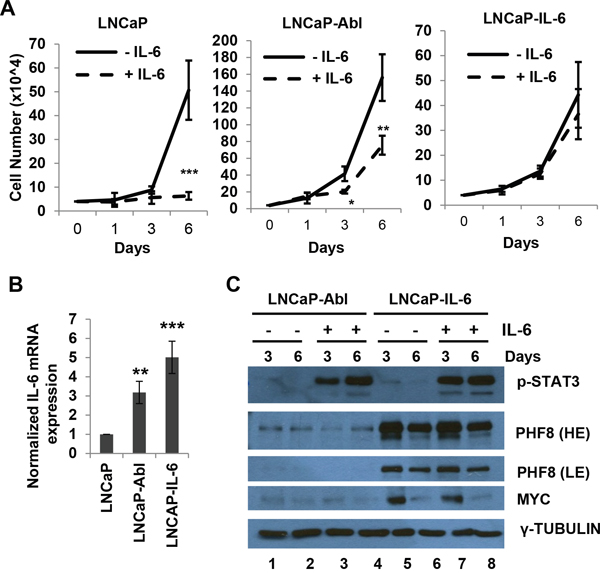 MYC and PHF8 cluster in responding to exogenous IL-6 in cells that are capable of either partial or full autocrine IL-6 signaling.