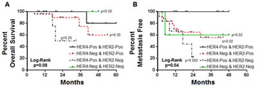 Kaplan-Meier plots for overall survival and development of metastasis in neoadjuvant trastuzumab treated cohort segregated by HER2 and HER4 co-expression patterns.