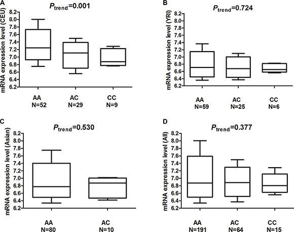 mRNA expression level of the MDM4 gene in Epstein-Barr virus (EBV)-transformed lymphoblastoid cell lines.
