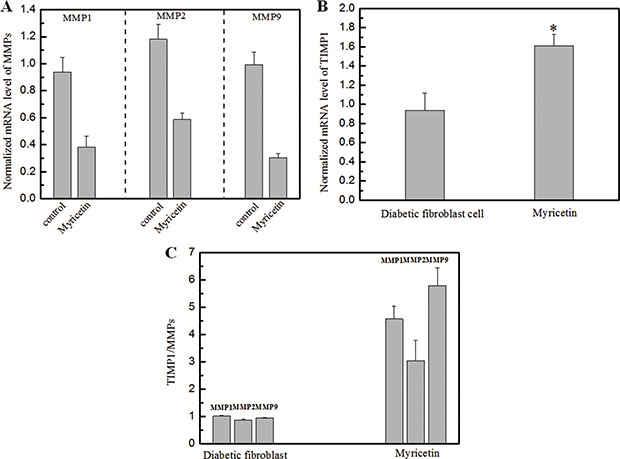 Effects of myricetin on the ratio of TIMP1/MMPs in diabetic fibroblasts Legends.
