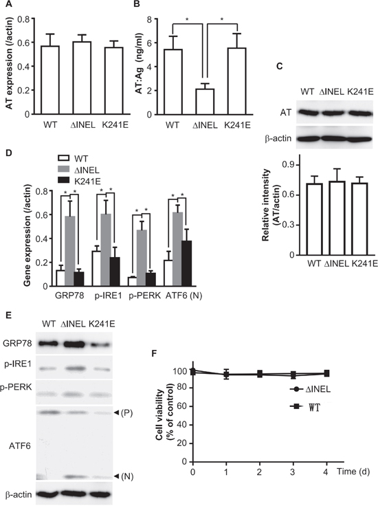 The accumulation of mutant AT activates ER stress.
