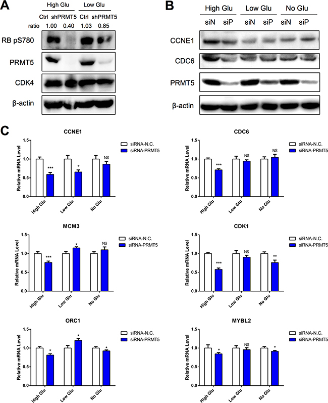 PRMT5 activation of CDK4-pRB-E2F-mediated transcription in high glucose condition.