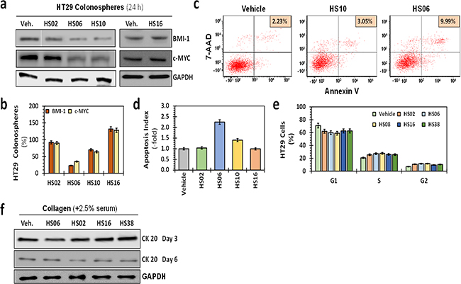 Effects of HSGAGs on broad cellular processes of HT29 CSCs.