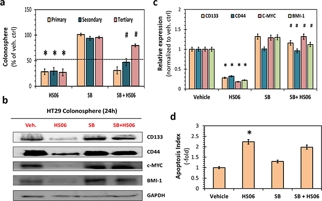 Activation of p38MAPK is critical for HS06's effect on CSCs growth and self- renewal.