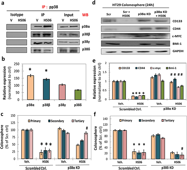 Isoform specific activation of p38MAPK is critical for HS06's effects on CSCs growth and self-renewal.