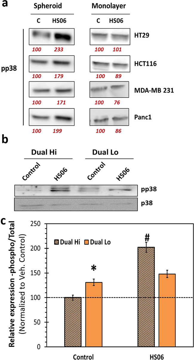 Effects of HS06 on activation of p38MAPK is selective in CSCs.