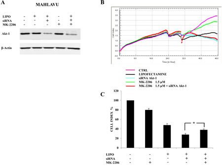 Down-regulation of Akt-1 reduces MK-2206 cytotoxicity in Mahlavu cells.