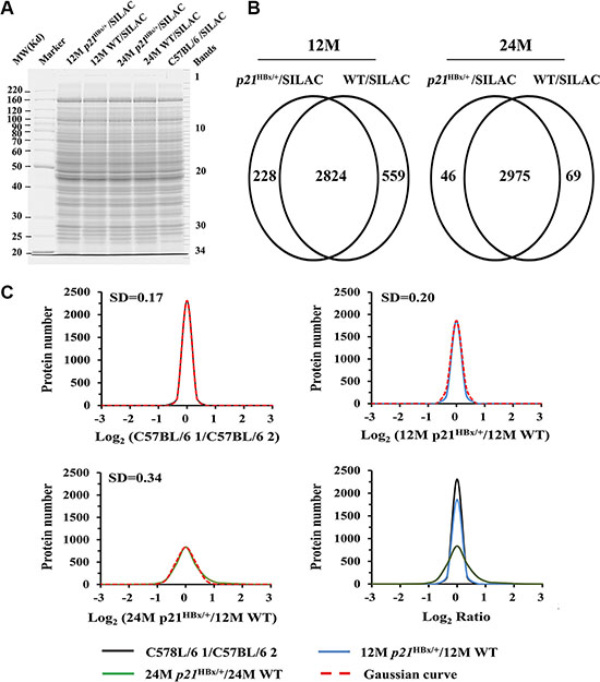 Data analysis for quantified proteins in quantitative MS study.