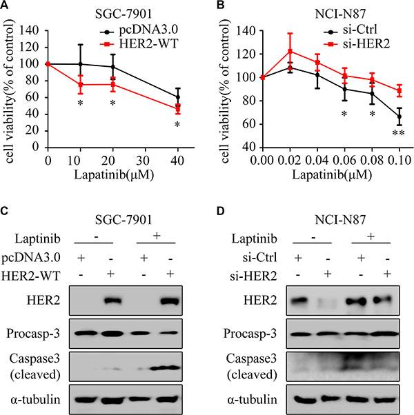 HER2 level contributes to lapatinib sensitivity.