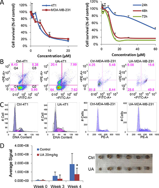 UA inhibits proliferation of breast cancer in vitro and in vivo.