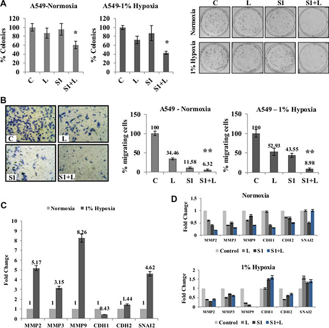 Combination treatment impairs clonogenic and migratory potential of cancer cells.