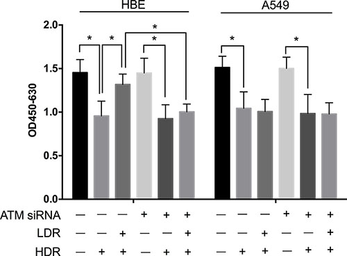 Knockdown of ATM with siRNA attenuated the protective effect of LDR in HBE cells but not in A549 cells.