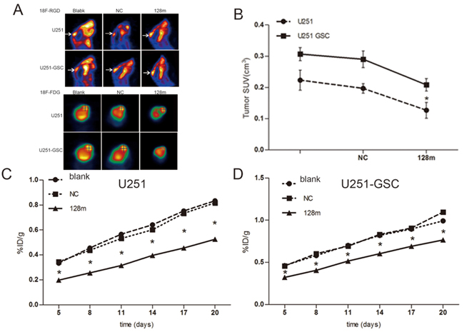 miR128-1 overexpression inhibited the growth of mouse glioma xenografts.