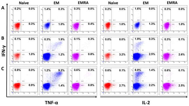 Multifunctional JCV-specific CD8+ T cells: The ability of epitope-specific CD8+ T cells to secrete the cytokines IFN-γ, TNF-α and IL-2 after stimulation with peptides was evaluated by intracellular flow cytometry staining.