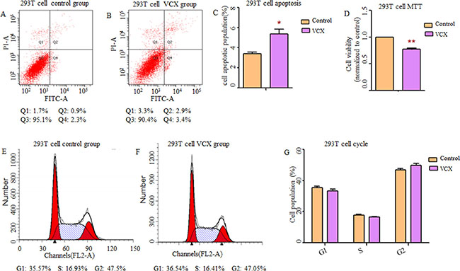 Effect of VCX on cell apoptosis, cell proliferation and cell cycle in 293T cells.