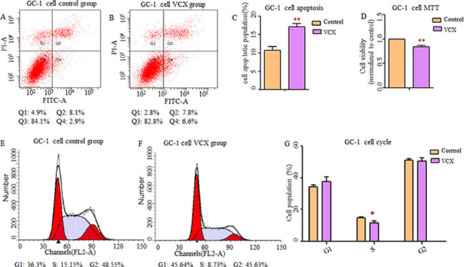 Effect of VCX on cell apoptosis, cell proliferation and cell cycle in GC-1 cells.
