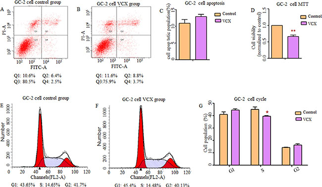 Effect of VCX on cell apoptosis, cell proliferation and cell cycle in GC-2 cells.