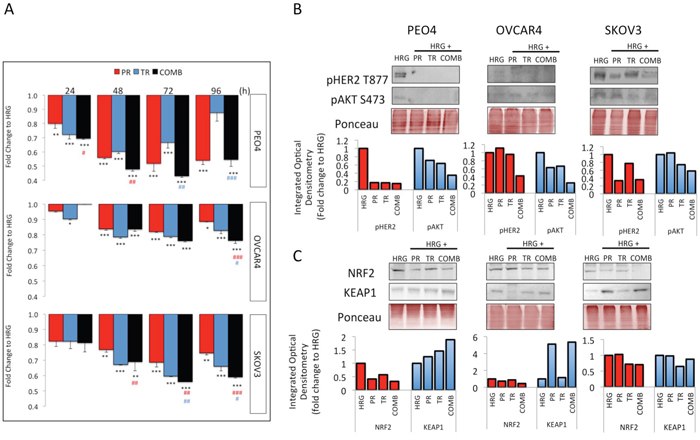 Treatment with Trastuzumab and/or Pertuzumab causes cytotoxicity and modulates expression of pHER2, pAKT, NRF2 and KEAP1 in ovarian cancer cell lines.