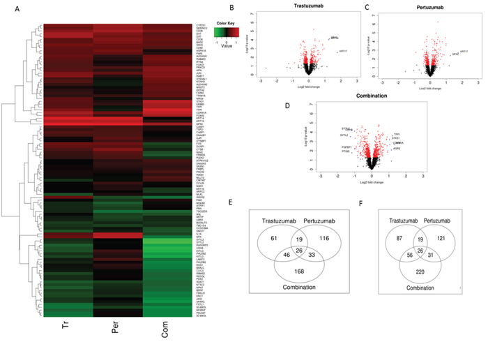 NRF2 network dependent molecular responses to Trastuzumab and Pertuzumab alone or in combination.