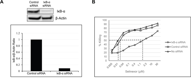 Reduction in the levels of IκB-α affects the potency of selinexor.