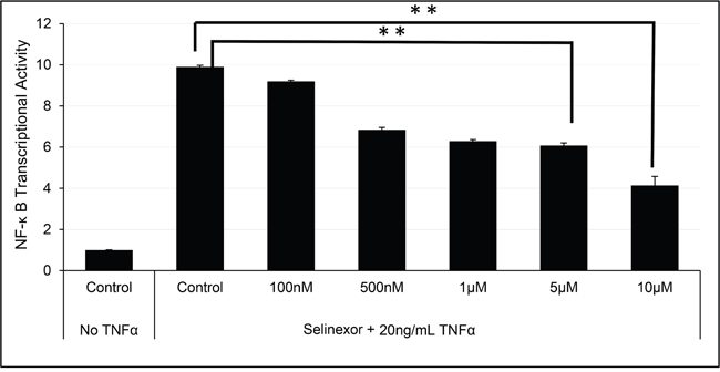 Selinexor inhibited NF-κB transcriptional activity.